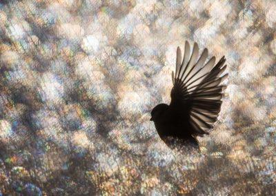 Bastien Riu (FRA) Fairy