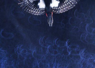 Dimas Serneguet Belda (ESP) | Fly