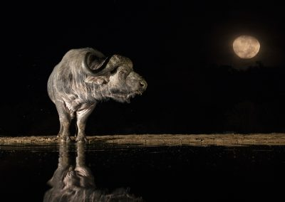 Andreas Hemb (SWE) | Old Buffalo and the moon