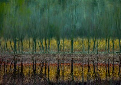 Uge Fuertes Sanz (ESP) | Autumn river
