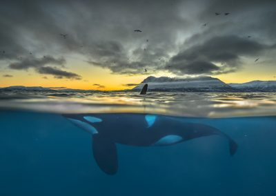 Audun Rikardsen (NOR)    Killer whale in polar night