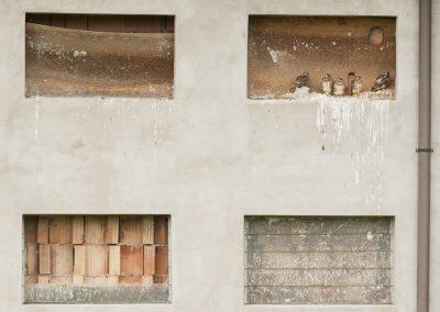 Paolo Meroni (ITA) | Kestrels window