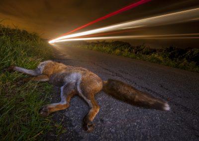 Neil Aldridge (UK)   Traffic Casualty