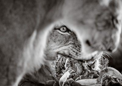David Lloyd (UK)    Lions at breakfast