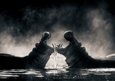 David Lloyd (UK)    Hippo Drama