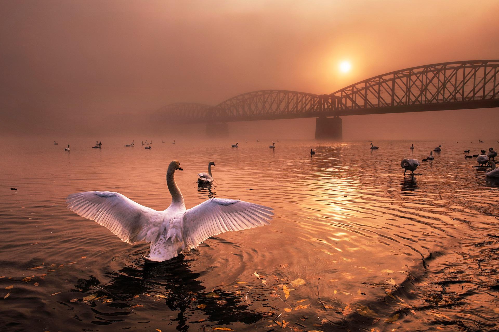 C01_65905_Birds_winner_Greeting-the-Sun_peter-cech_CZ.jpg
