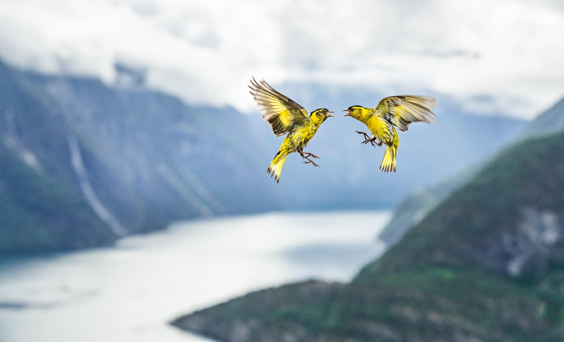 C01_76744_Birds_finalist_Fjord-Fight_Bernt-%C3%98sthus_NOR.jpg