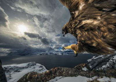 Audun Rikardsen (NO) | Golden eagle landing