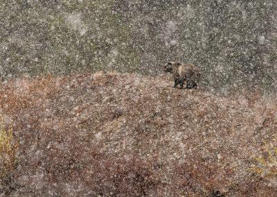 Stefano Quirini (IT)   Under the snow...