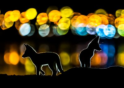 Mohammad Murad (KW)   Colorful Night