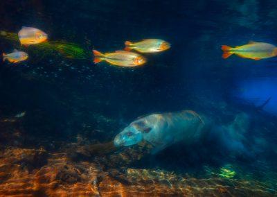 Marcio Esteves Cabral (BR) | Tapir Diver