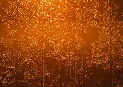 Staffan Widstrand ( SE)   Mid winter colours