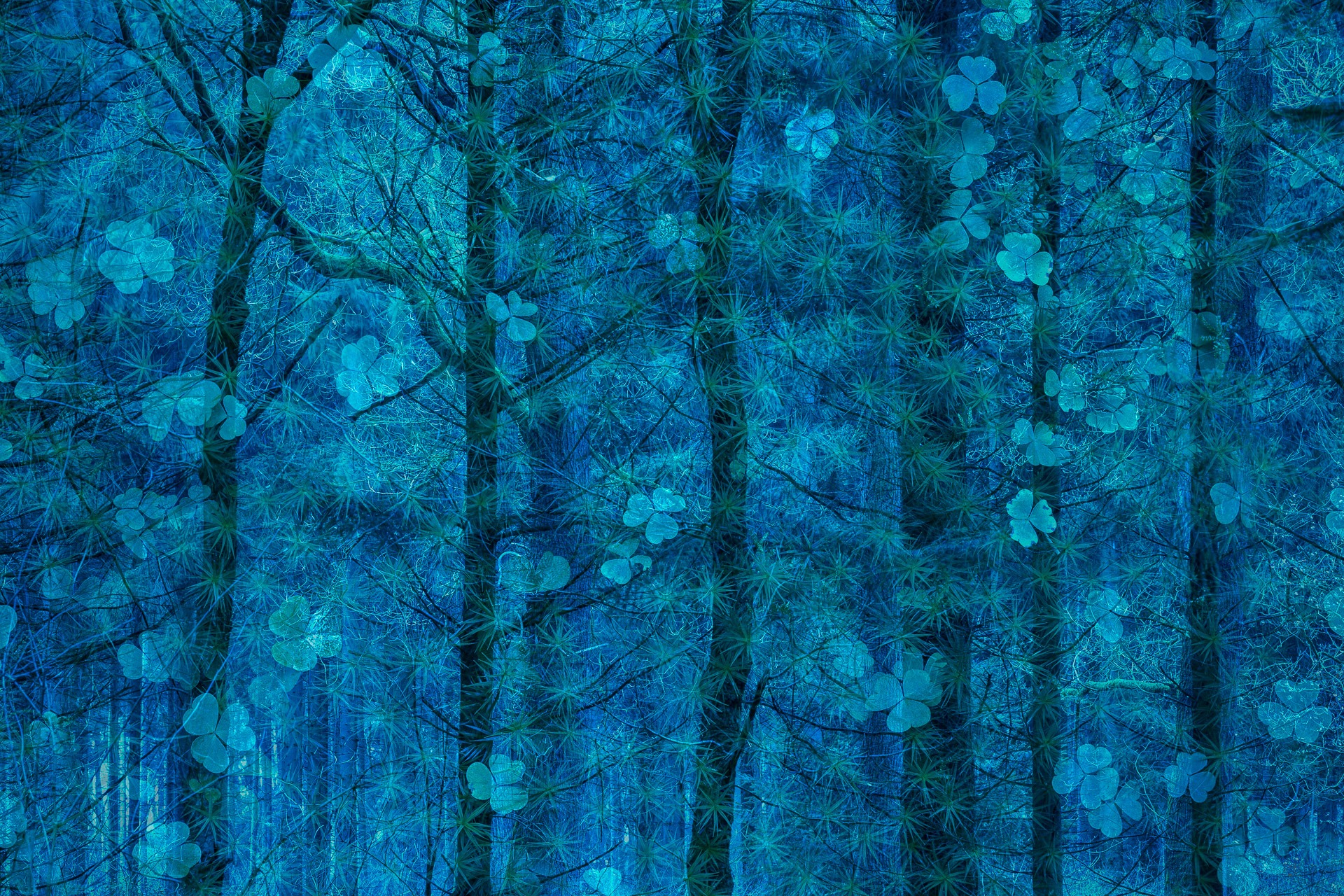 C07_59942_Nature-art_winner.jpg