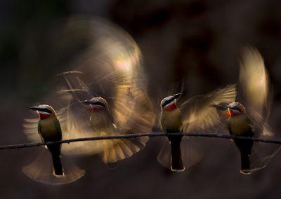 Bence Mate (HU)   Wings
