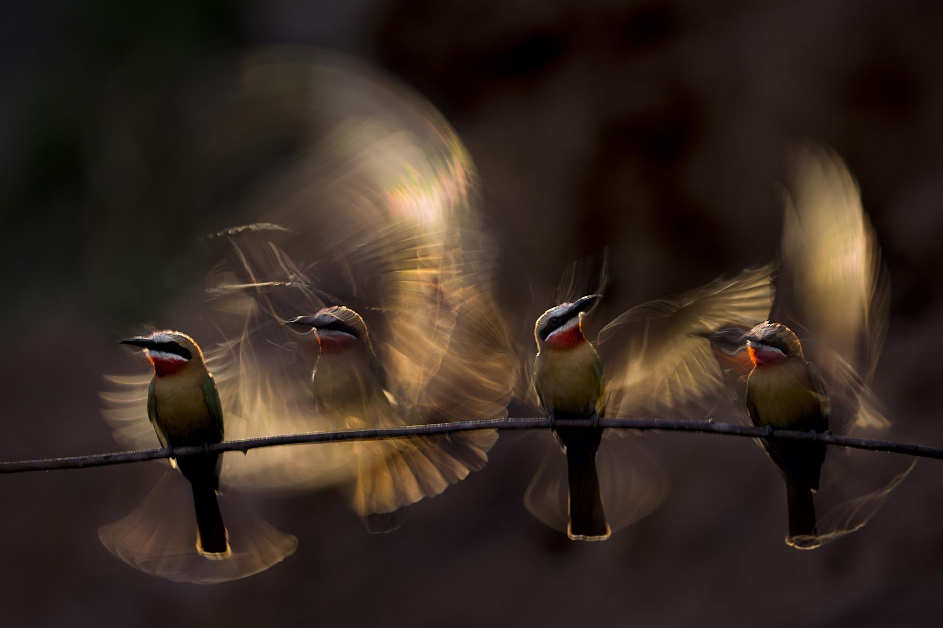 Bence Mate (HU) | Wings