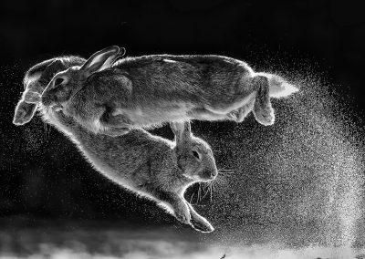 Csaba Daróczi (HU) | Jump