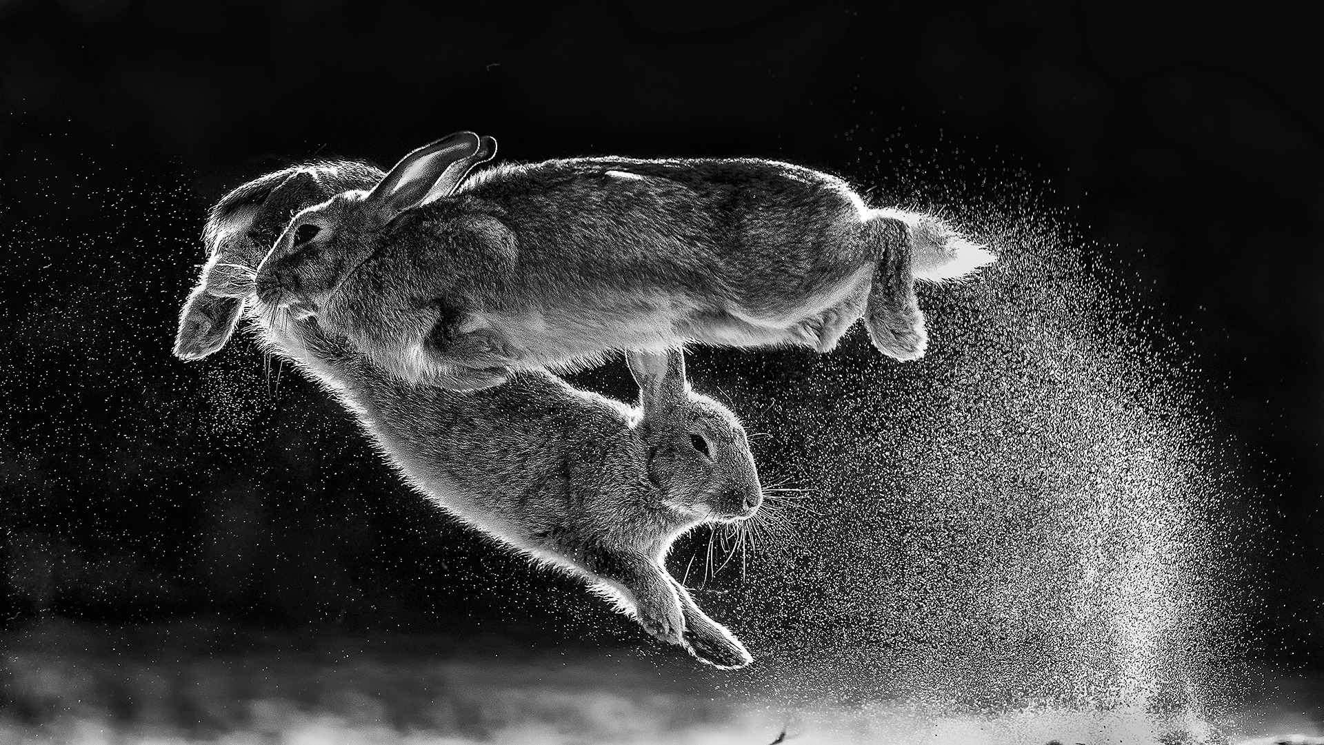 C09_76362_Black-and-white_winner_Overall-winner_Jump_Csaba-Daroczi_HUN-1.jpg
