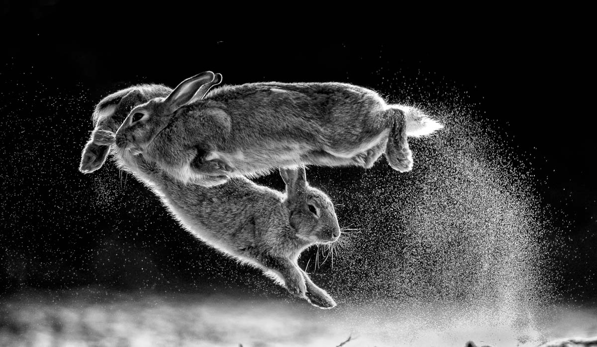NPOTY-2019_C09_76362_Black-and-white_winner_Overall-winner_Jump_Csaba-Daroczi-1200x630 Collection of Top Nature Photography Contests 2020 Resources Now @capturingmomentsphotography.net