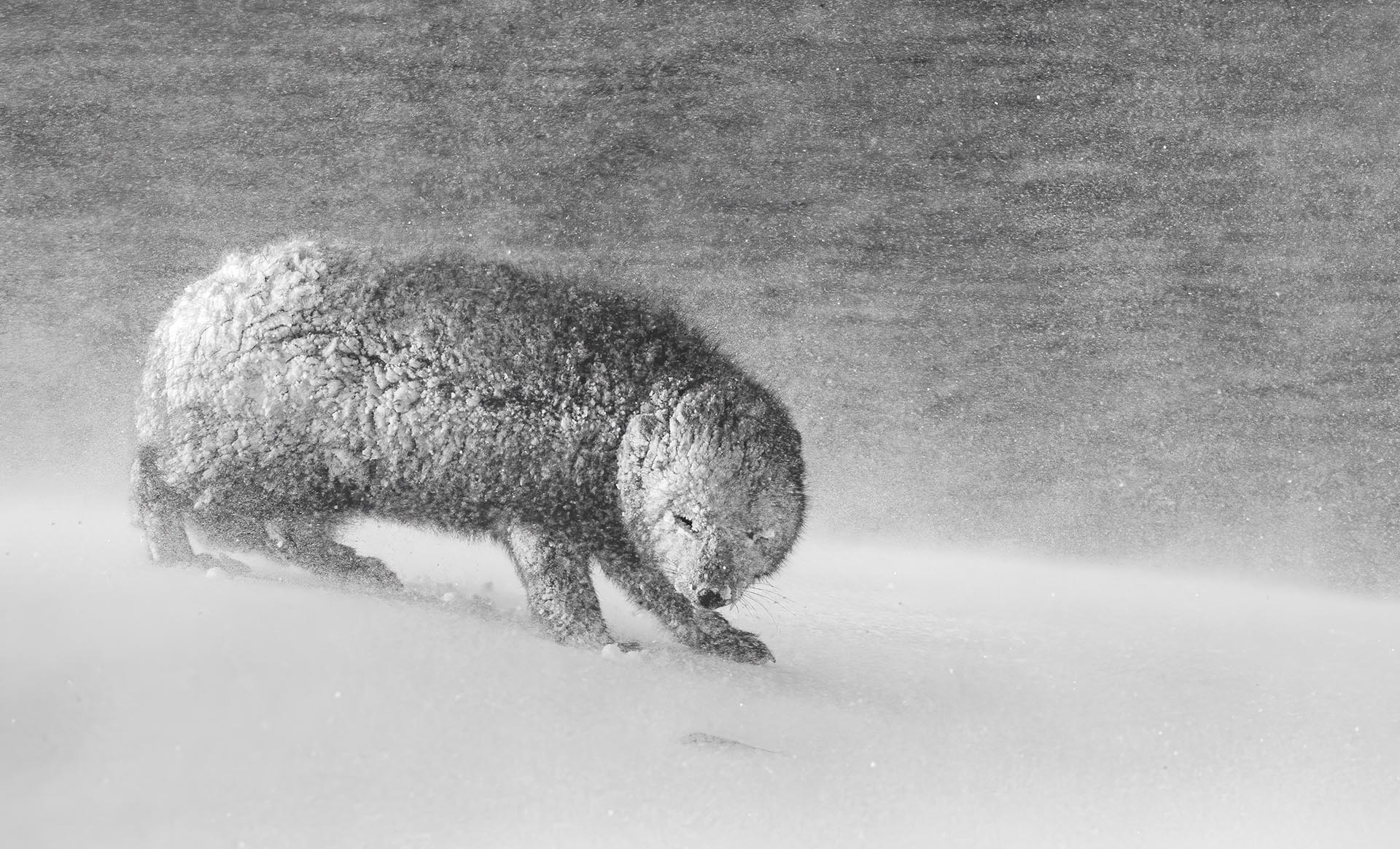 C9 Black & White Highly commended David Gibbon - Nature Photographer of the Year