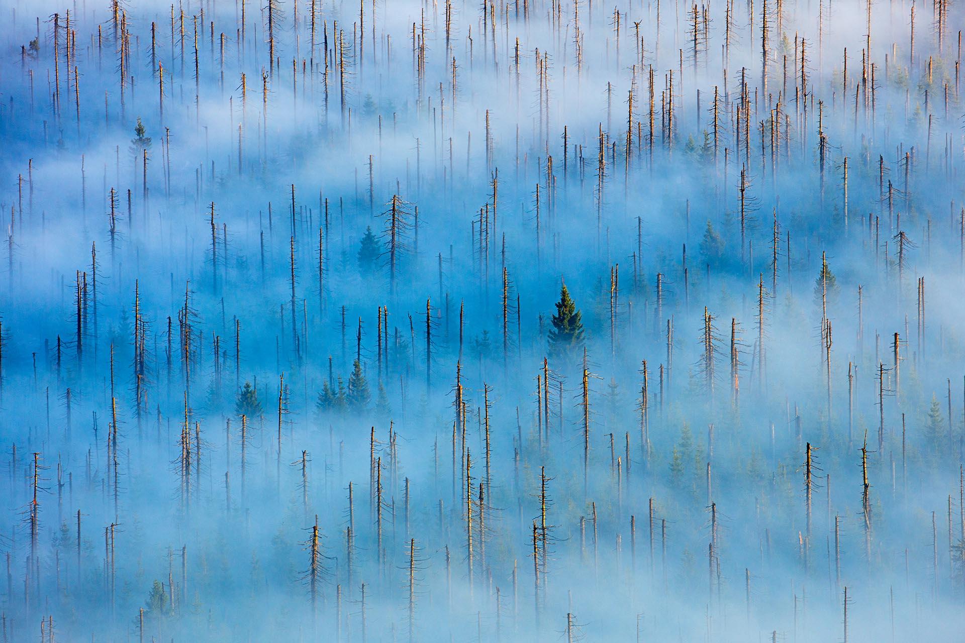C4 Plants and fungi Winner Radomir Jakubowski - Nature Photographer of the Year